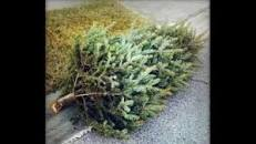 christmas tree pick up pic